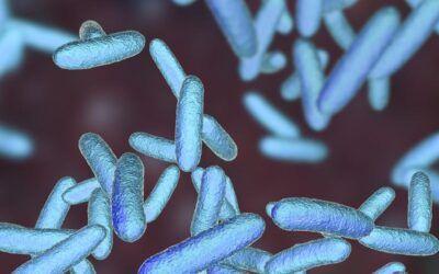 Identificada una bacteria intestinal que alarga la vida